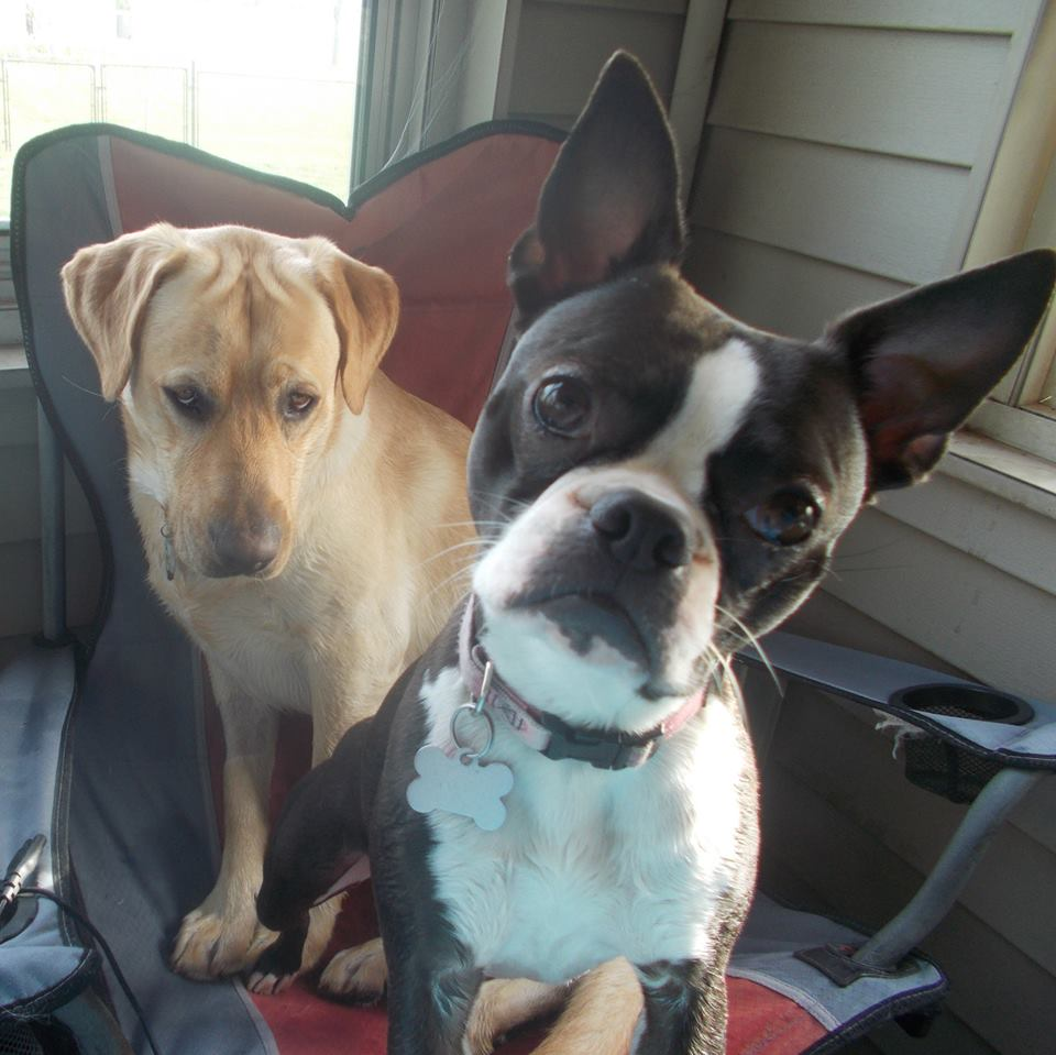backporch dogs