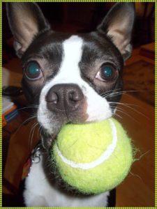 missy ball